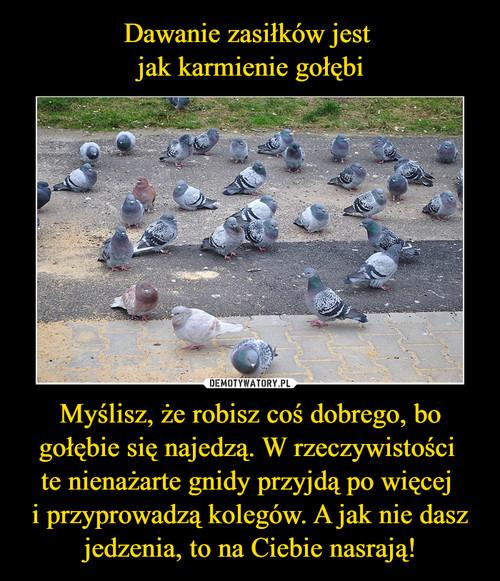 Dawanie zasiłków jest  jak karmienie gołębi Myślisz, że robisz coś dobrego, bo gołębie się najedzą. W rzeczywistości  te nienażarte gnidy przyjdą po więcej  i przyprowadzą kolegów. A jak nie dasz jedzenia, to na Ciebie nasrają!