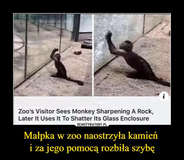 Małpka w zoo naostrzyła kamień i za jego pomocą rozbiła szybę –