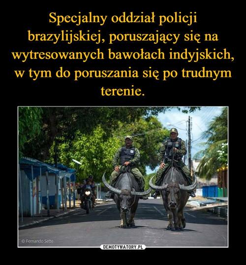 Specjalny oddział policji brazylijskiej, poruszający się na wytresowanych bawołach indyjskich, w tym do poruszania się po trudnym terenie.