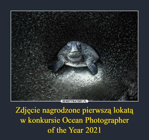 Zdjęcie nagrodzone pierwszą lokatąw konkursie Ocean Photographerof the Year 2021 –