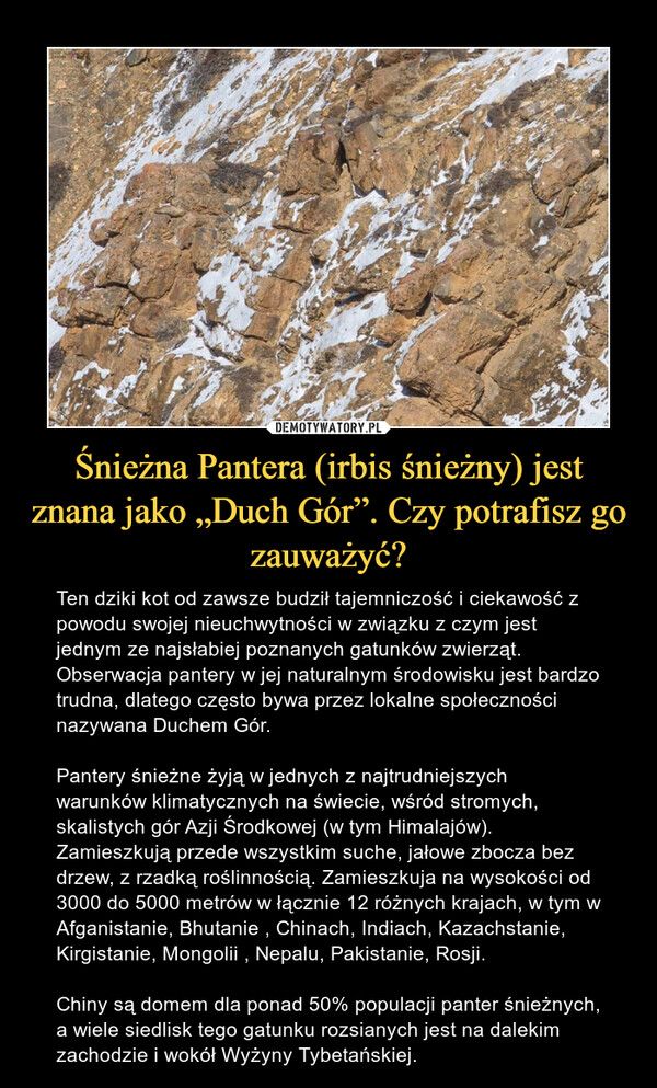 """Śnieżna Pantera (irbis śnieżny) jest znana jako """"Duch Gór"""". Czy potrafisz go zauważyć? – Ten dziki kot od zawsze budził tajemniczość i ciekawość z powodu swojej nieuchwytności w związku z czym jest jednym ze najsłabiej poznanych gatunków zwierząt. Obserwacja pantery w jej naturalnym środowisku jest bardzo trudna, dlatego często bywa przez lokalne społeczności nazywana Duchem Gór.Pantery śnieżne żyją w jednych z najtrudniejszych warunków klimatycznych na świecie, wśród stromych, skalistych gór Azji Środkowej (w tym Himalajów). Zamieszkują przede wszystkim suche, jałowe zbocza bez drzew, z rzadką roślinnością. Zamieszkuja na wysokości od 3000 do 5000 metrów w łącznie 12 różnych krajach, w tym w Afganistanie, Bhutanie , Chinach, Indiach, Kazachstanie, Kirgistanie, Mongolii , Nepalu, Pakistanie, Rosji.Chiny są domem dla ponad 50% populacji panter śnieżnych, a wiele siedlisk tego gatunku rozsianych jest na dalekim zachodzie i wokół Wyżyny Tybetańskiej."""