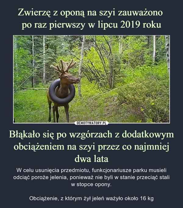 Błąkało się po wzgórzach z dodatkowym obciążeniem na szyi przez co najmniej dwa lata – W celu usunięcia przedmiotu, funkcjonariusze parku musieli odciąć poroże jelenia, ponieważ nie byli w stanie przeciąć staliw stopce opony.Obciążenie, z którym żył jeleń ważyło około 16 kg